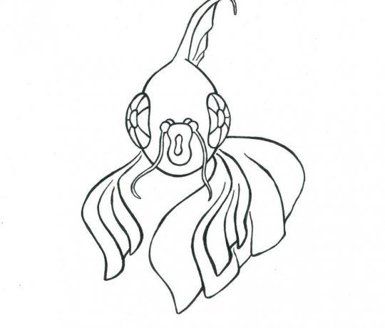 rybka-amfas