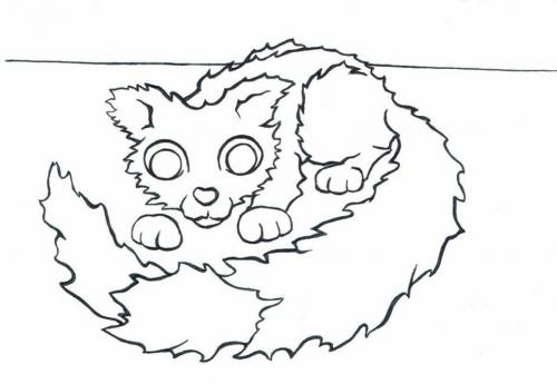 Kočka omalovánky