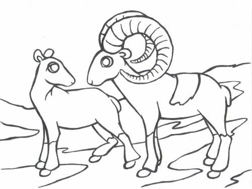 Mufloni omalovánky
