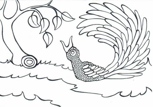 Rajský pták omalovánky