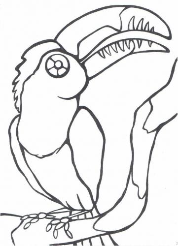 Tukan omalovánky