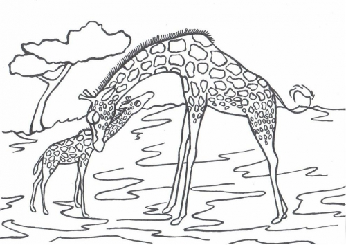 Žirafy omalovánky